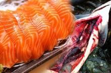 แทบอ้วก!! เมื่อเห็นสิ่งนี้อยู่ในปลาแซลม่อน บอกเลย เลิกกิน !!