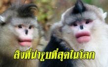 ลิงที่น่าจูบที่สุดในโลก!! ปากสวยราวทำศัลยกรรม แถมได้ยินว่าเจ้าสำอางสุดๆ เหลือไม่กี่ตัวบนโลกแล้ว