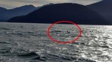 เดี๋ยวนะ!! ครอบครัวออกไปตกปลาในทะเล แต่ดันบังเอิญได้สัตว์เหล่านี้ตัวซะงั้น!!