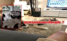 ผงะ !! อุทาหรณ์ของคนเลี้ยงหมา ซนมากจนสภาพบ้านยับเยิน