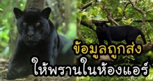 ผู้พิทักษ์ป่าเผยแล้ว !! ทำไมเสือดำ ถูกฆ่าง่าย ที่แท้เพราะข้อมูลนี้ ถูกส่งให้พรานในห้องแอร์
