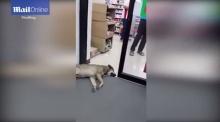 """""""หมาหน้าเซเว่น""""ดังไปทั่วโลกแล้ว!"""