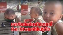 โคตรน่ารัก ! หนูน้อยลูกครึ่ง กินแตงโมแบบถึงลูกถึงคน เอาหัวมุดเข้าไปกินข้างในมันซะเลย(มีคลิป)
