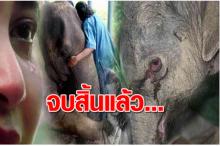 ช้างไทยใครจะดูแล!!  มูลนิธิเพื่อนช้าง ประกาศปิดตัว แถมโดนทำแบบนี้อีก!?