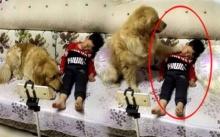 น้ำตาคลอ..แม่ปล่อยลูกน้อยเล่นกับสุนัข เมื่อเห็นภาพตรงหน้า? และนี่สิ่งที่เกิดขึ้น!!!