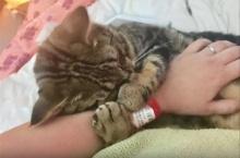 สาวเจอแมวจรที่ปั๊มน้ำมัน พอพากลับมาบ้านมันก็กอดแขนไม่ยอมปล่อยเลย