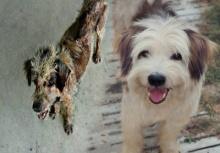 แห่ชื่นชม!!หนุ่มผู้เปลี่ยนหมาจรจัดขี้เรื้อน ให้มีชีวิตใหม่ที่ไฉไลกว่าเดิม!!