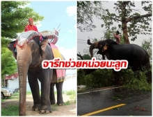 """เปิดใจควาญช้าง """"สีดอจารึก วัย 53 ปี"""" ฮีโร่เคลียร์ต้นไม้ล้มขวางถนน"""