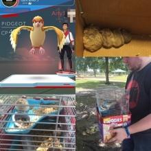 คู่หนุ่มสาวมะกันช่วยหนูแฮมสเตอร์ฝูงใหญ่ จากแอพ 'Pokemon Go' โดยบังเอิญ!