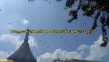 """ชาวไทยแปลกใจ!!""""ปรากฏการณ์ฝูงนกนับ 100 บินเหนือพระบรมมหาราชวัง"""""""