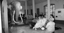 ภาพประวัติศาสตร์ ประวัติช้างเผือกคู่บารมี ร.9