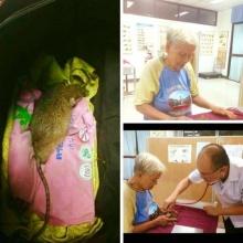 เรื่องเล่าจากโรงพยาบาลสัตว์ เมื่อเจอคุณยายเลี้ยงหนูบ้าน!!