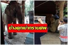 อึ้งทั้งงาน!! ช้างใหญ่ ถอนหลักที่ล่ามหลุด วิ่งร้องไห้มากราบศพ คุกเข่าลงต่อหน้า