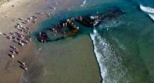 ไขปริศนา? ซากเรือเกยหาดแคลิฟอร์เนีย ใช่เรือสำราญร้างและมีหนูกินกันเองหรือไม่ (คลิป)