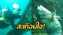 นักประดาน้ำ สำรวจทะเล หวังพบความสวยงาม แต่น่าใจหาย พบแต่ปลาติดอวนตายเพียบ!