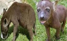 หนุ่มเห็นลูกหมาผอมโซ เลยเก็บมาเลี้ยง ตกกะใจแรงไม่คิดว่าโตขึ้น มันจะอันตรายถึงขั้นฆ่าเขาได้!