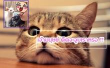 เมื่อทาสแมวอยากจะจูบเจ้าเหมียว !! สิ่งที่เกิดขึ้นพีคมากกกก