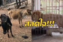 เห็นแล้วสลดเลย!!สาวโพสต์สภาพสัตว์ในวัดเสือ ผอมจนหนังติดกระดูก!