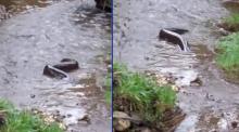 วินาที โคตรปลาไหลยักษ์ เลื้อยผ่านต่อหน้า ริมลำธาร กลั้นใจดูต่อไป เห็นสภาพเต็มอึ้ง! (คลิป)