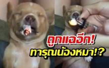 คนรักสัตว์ฉะยับ! เจ้าของร้านข้าวมันไก่แอบถ่ายลูกค้า เคยจุดบุหรี่(?)ยัดปากลูกหมา (มีคลิป)