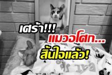 สะเทือนใจทาสแมว!!'แมวอโศก' สิ้นใจแล้ว-เตรียมนำกระดูกฝัง(คลิป)