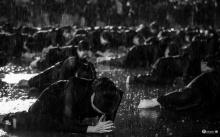 สวยงามปนเศร้า....ชาวอุดร ถวายอาลัย กลางหยาดฝนโปรยปรายจากฟากฟ้า