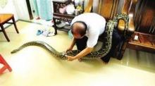 ทำไปได้!!! ลุงชาวจีนอยู่กินกับงูเหลือมยักษ์นาน 7 ปีเปรียบเสมือนลูก