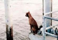ชีวิตใหม่!!หมานั่งรอเจ้าของที่ท่าเรือ ได้เจ้าของใหม่จัดเบนซ์มารับถึงที่!!