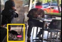 อ้าวเฮ้ย!อย่างนี้ก็ได้เหรอ!? เจ้าของ ให้หมา กินข้าวในจานสำหรับคน!!