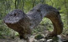 มันคืออะไร? ท่อนไม้สุดแปลกในป่า มีแสงสะท้อนเงาวับตา พอไปดูใกล้ๆ ถึงกับอึ้ง!!?