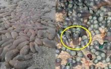 สาวเดินเล่นริมทะเล พบบางอย่างคล้ายขวดน้ำ ดิ้นดุ๊กดิ๊ก!! ก่อนรู้ว่าแท้จริงมันคือ? สยองสุดๆ