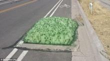 อึ้งหนักมาก!! ชาวบ้านตื่นตระหนกพบ ฟองโฟมสีเขียว ประหลาดผุดมาจากท่อระบายน้ำ
