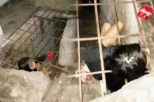 ครอบครัวโหด จับ หญิงป่วยจิต ขังคุกใต้ดิน! ชาวบ้านสุดทน!แชะภาพประจาน