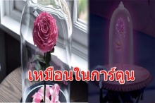 สุดมหัศจรรย์!!! ดอกกุหลาบ ที่บานสะพรั่งได้นานถึง 3 ปี !!