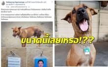 เฉลยแล้ว!! อะไรอยู่หลังรูปของเจ้าของน้องหมาตัวนี้!?