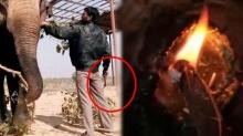 หนุ่มอินเดียอำมหิต! จับช้างทารุณ ใช้ขวานทุบ เชือกมัด จุดไฟเผาปางตาย