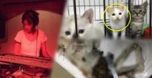 ทาสแมวเดือด! ดีเจสาวชอบขอลูกแมวไปเลี้ยง ก่อนนำไปทารุณ ควักไส้แลกเหรียญในดาร์กเว็บ!