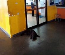 สุดใจดำ พาหมาขึ้นเครื่องไม่ได้-ทิ้งคาคาร์โก้ ตูบซึมนอนรอเจ้าของ