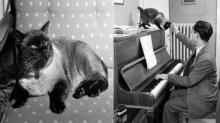 ติโต แมวทรงเลี้ยงในหลวง เมื่อครั้งประทับสวิตเซอร์แลนด์