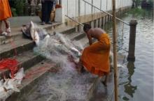 จวกคนใจบาปลงข่ายดักปลา ตายหน้าวัดนาบุญนับร้อย