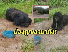 ทำได้ลงคอ!! พบสุนัข ถูกทิ้งดอยอ่างขาง พร้อมขันน้ำประทังชีวิต ประกาศหาเจ้าของ