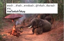 """ศรัทธาหาย!! เมื่อภาพดัง """"ช้างหมอบกราบพระป่า"""" โดนแฉเบื้องหลัง"""